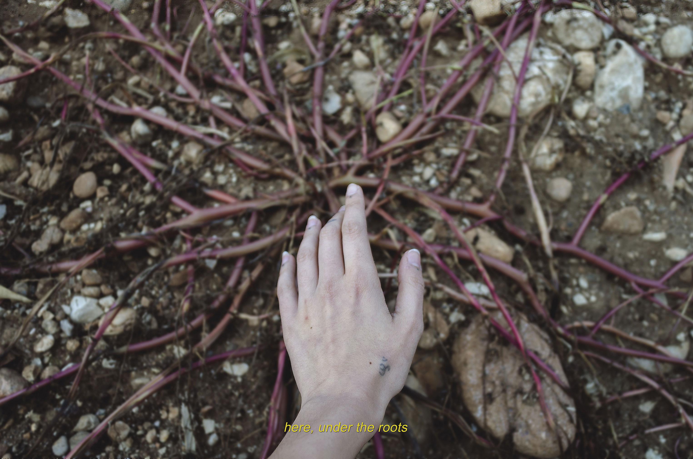Qui, sotto le radici